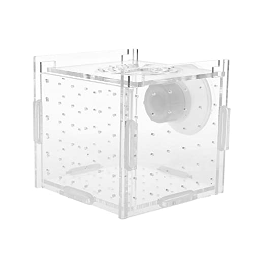 N / B Boîte d'incubateur d'écloserie de réservoir de Poissons d'aquarium 2 pièces, Isolation Acrylique d'éleveur, Accessoire de boîte d'élevage de Poissons, améliore la viabilité des Poissons
