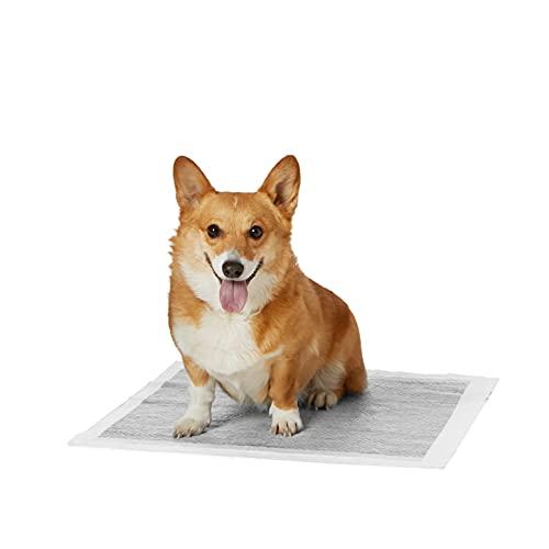 Amazon Basics - Tappetini igienici con carbone attivo per l'addestramento di cagnolini e altri animali domestici, misura standard, 80 pezzi