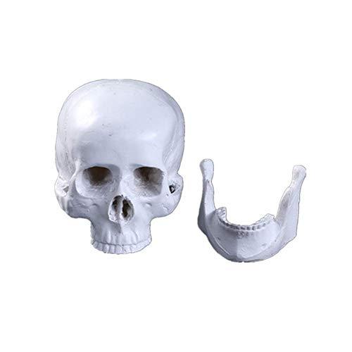 Simulación de Resina Decoración cráneo Humano, Personalidad Realista plástico cráneos de la Cabeza de Juguete Modelo Hecho a Mano for Ministerio de Ciencia Juguetes educativos WTZ012
