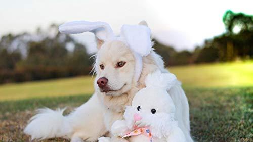 YINGXINXWM DIY Malen Nach Zahlen Set Leinwand Ölgemälde Hundespielzeug Kaninchen Erwachsene Kinder Zuhause Dekor 16X20 Inch No Frame