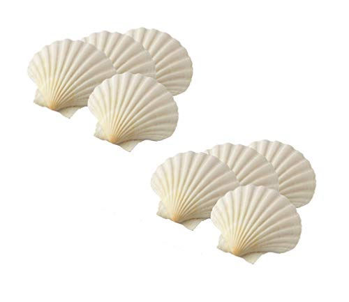 Maine Man Baking Shells, 4 Inch, Set of 8, Natural Seashell