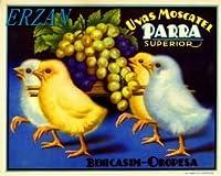ERZANメタルポスター壁画ショップ看板ショップ看板スペインスペインの赤ちゃんひよこチキングレープフルーツクレートラベルアートインテリア 看板20x30cm