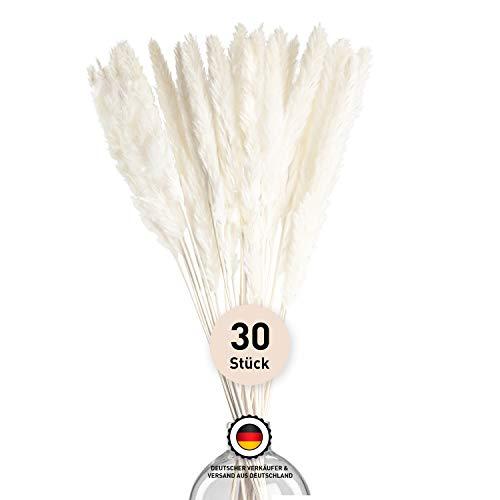 Farrell Brec [Einführungsangebot 2020] 30 x getrocknetes Pampasgras in weiß - extra langlebige und geruchsneutrale Trockenblume für die Inneneinrichtung - natürlich in Handarbeit getrocknet