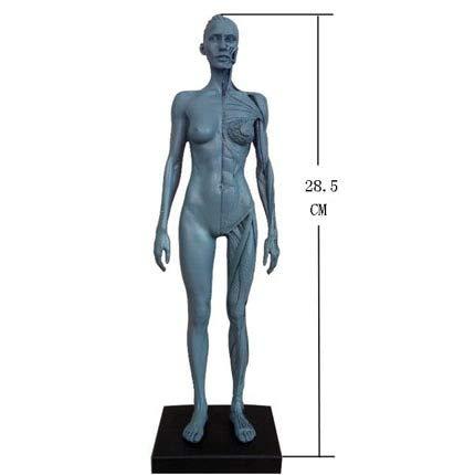 DAJIADS Figur Figuren Buddha Statue Statue Statuen Skulpturen Dentallabor Zahnarzt Höhe Menschlichen Akupunktur Anatomische Anatomie Schädel Blut Skulptur Kopf Körper Modell Muskel Knochen Artist