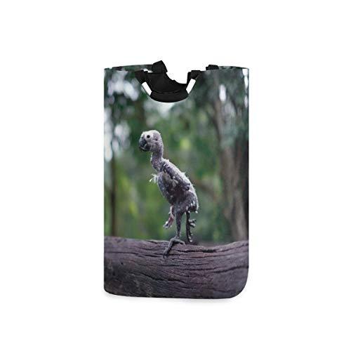COFEIYISI Wäschesammler Wäschekorb Faltbarer Aufbewahrungskorb,Die Sehnsucht des jungen Vogeladlers nach unreifen Pfoten, die Holzpfähle stehen und weniger Federn anstarren,Wäschesack - Wäschekörbe