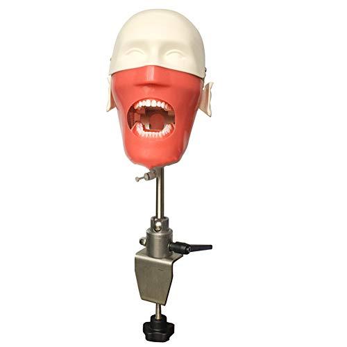 VIEUR Dental Ausbildung Männchen Phantom Kopf Simulator mit Torso dental Simulatoren Hygiene Zahnheilkunde Bildung Männchen