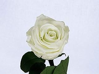 Rosa eterna preservada Blanca de 25 cm
