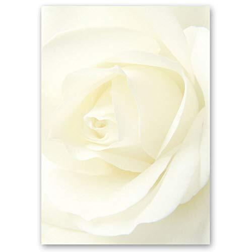 20 Blatt Briefpapier Blumen & Blüten, Liebe & Hochzeit WEISSE ROSE - DIN A4 Format - Paper-Media