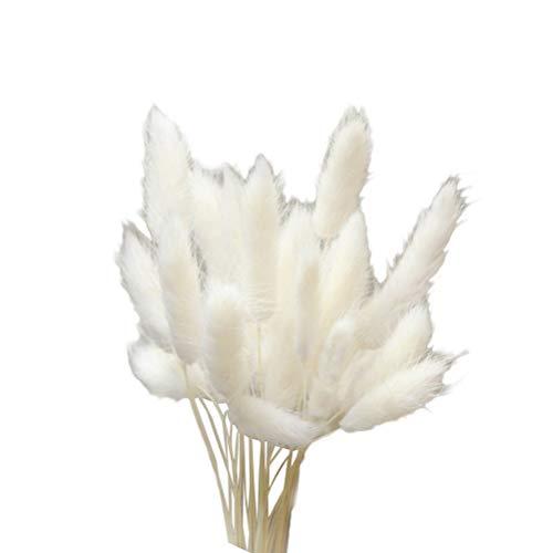 Vosarea 20pcs Flores secas Naturales Colorido Lagurus Ovatus Verdadero Ramo de Flores para el hogar decoración de la Boda Conejo Cola Hierba Manojo (Blanco)