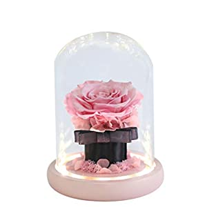 Silk Flower Arrangements YSHCA Preserved Flower Rose, Beauty and The Beast Artificial Silk Rose Forever Rose in Glass Dome for Her for Valentines Day Mothers Day Anniversary Wedding Birthday Gifts