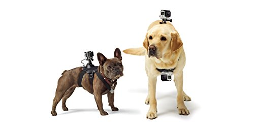 GoPro Fetch Dog Harness (All GoPro Cameras) - Official GoPro Mount
