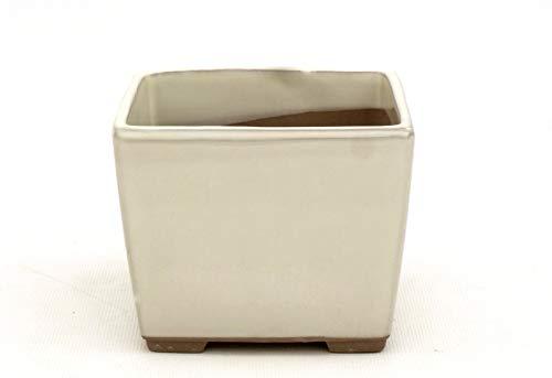 Bonsai Pavia | Macetas para Bonsais Japonesa Cuadrada 11,5 cm | con Esmalte Color Crema | Tamaño 11,5x11,5x9 cm