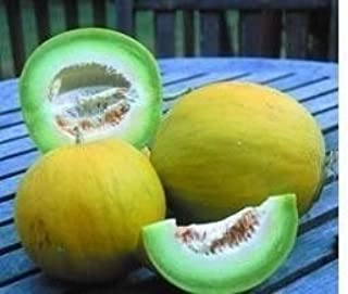 Boule D'or Melon AKA Golden Perfection Rare 20 Seeds Beautiful Non-GMO Heirloom