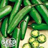 Serrano Chili Samen - 100 Samen
