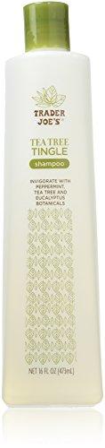 Trader Joe's Tea Tree Tingle Shampoo with Peppermint, Tea Tree and Eucalyptus Botanicals, 16-Ounces