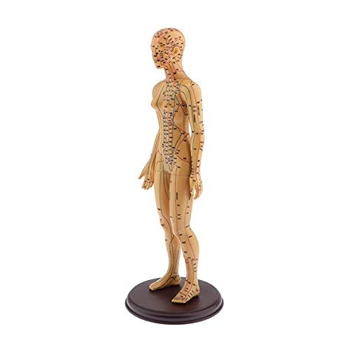 Modelo De Acupuntura Del Cuerpo Humano - Punto De Presión Y Meridianos,...