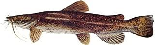 Best flathead catfish stickers Reviews