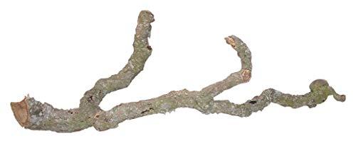 "Lucky Reptile 64137\""Tronchos Korkast 60-90 cm"