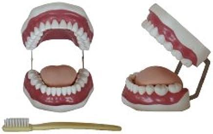 Modell-Scaler (28 Zähne) Zähne) Zähne) xc-403 B074DSZ98B | Verkauf  5b0c60