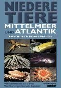 Niedere Tiere Mittelmeer + Atlantik