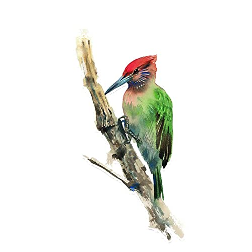 Pájaro Carpintero Lindo en la Rama de árbol Etiqueta engomada del Coche Accesorios de decoración de la Moda Personalizada PVC calcomanía 15 * 8cm (Color : 1, Size : 15 x 8 cm)