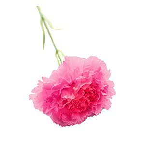 MZRI Artificial Carnations, Artificial Flowers, Faux Silk Flowers, Home Decor, for Funeral Arrangements, Wedding Bouquets, Cemetery Wreaths, DIY Crafts – Overall Height 44cm