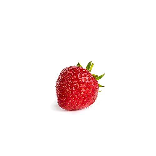20 Senga Sengana Erdbeerpflanzen - Frigo Plus Pflanzen - Pflanzzeit: März/April - Ernte: Juni - Erdbeersetzlinge/Erdbeerstecklinge - Erdbeerprofi.de