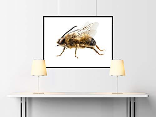 Preisvergleich Produktbild Unbekannt Insect Photography-Insektenfotografie-Insecte Bee Eucera longicornis 01 Papel Mate 240gr 9x12 Inches
