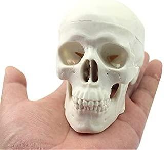 Zgood Mini Human Medical Anatomical Head Bone Skull Bone Model