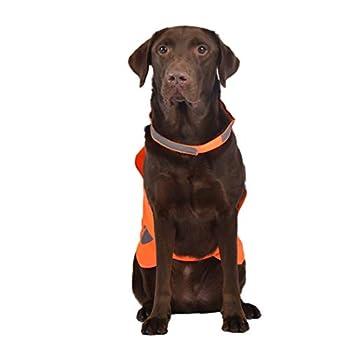 AYKRM Gilet de sécurité réfléchissant pour Chien – Gilet de Chasse imperméable Orange pour Une Meilleure visibilité de Jour (50, Orange)