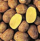 Seed Potatoes for Planting Yukon Gold 5lbs