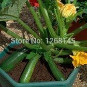 Casavidas Seltene Gemüse, 10pcs Cucurbita pepo, Zucchini schöne Bonsai-Pflanze Hausgarten