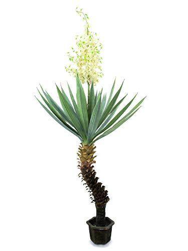 artplants.de Set 2 x Künstliche Yucca Palme mit 40 Blättern, 120 Blüten, 220cm, wetterfest - Kunstpflanzen Yucca - Kunstpalme