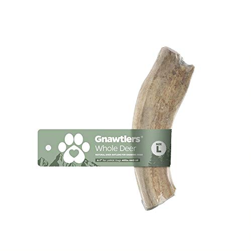 Gnawtlers - Premium Deer Antlers for Dogs, Naturally Shed Deer Antlers, All Natural Deer Antler Dog Chew, Specially Selected from The Heartland Regions - 6 -7' Deer Antler Large
