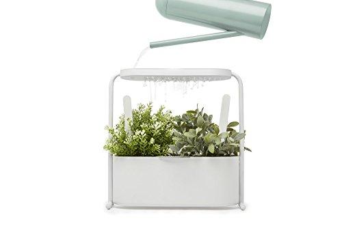 Umbra Giardino Pflanzbehälter und Kräutertopf mit integriertem Wasserablauf – Kräutergarten-Set mit herausnehmbarem Einsatz, für Fensterbank und Arbeitsfläche, Metall / Weiß