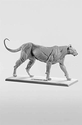 3dtotal Anatomy Katzenfigur