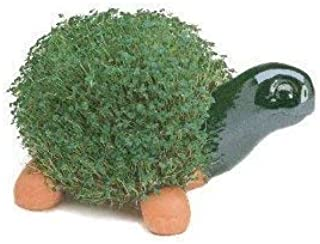 Chia Pet, Turtle