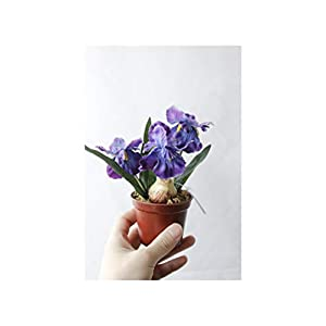 Misscany 3 Colours 1Set Mini Artificial Flower Fake Iris Potting Silk Flowers Bonsai for Wedding Home Party Decorative,Purple
