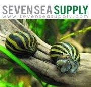 SevenSeaSupply 5 Zebra Nerite Fresh Water Aquarium Snails