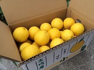 有機肥料で育てた土佐の小夏 5kg×1箱 家庭用 青山農園 日向夏 サマーオレンジ スッキリとした味わい