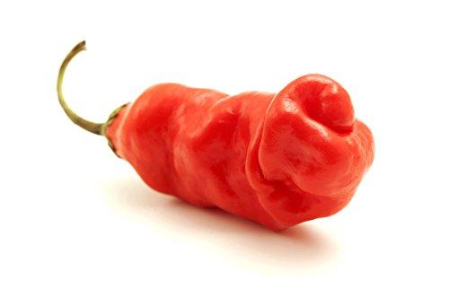Penis Chili rot 10 Samen, Peter Pepper, Paprika Samen