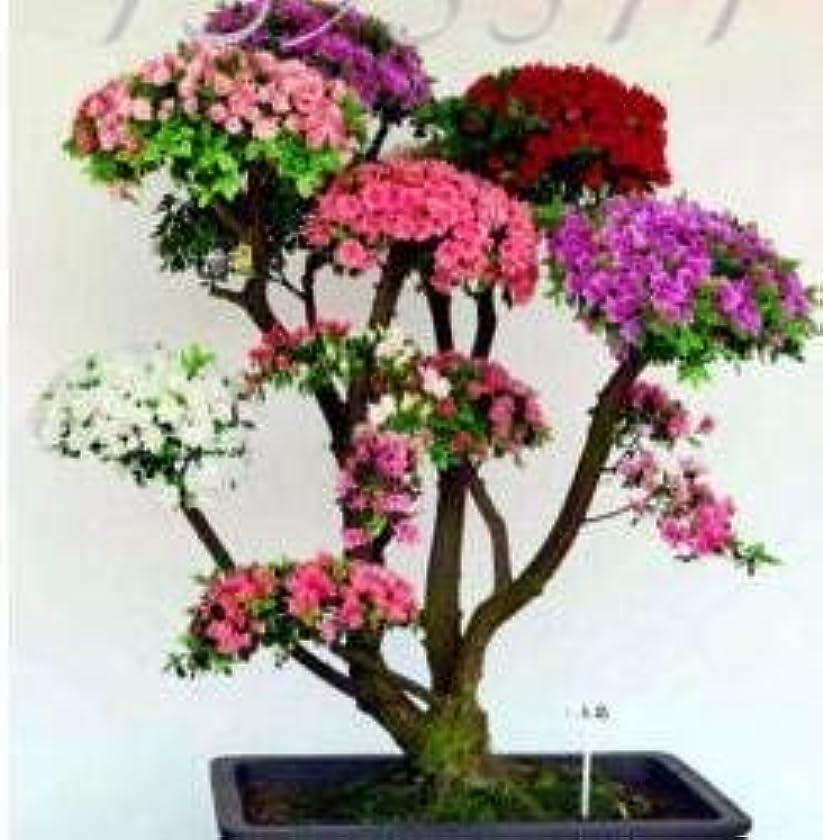 奴隷存在手足種子のパッケージではありません植物:5種類日本の桜の種盆栽種子、盆栽の種の花桜、DIYホーム&??ガーデン、15個H48混合
