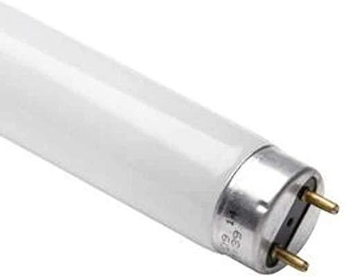 Osram LUMILUX Deluxe T8 G13 L 36 W/940 Lampe fluorescente