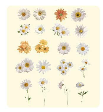 N/D Designs Natural Daisy Stickers Transparent PET Material 3D Flowers Leaves Plants Deco Stickers
