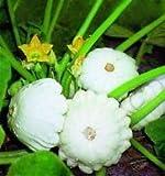 Verdura Estate Squash Patty Pan (Capesante) 60 Semi di Zucchine