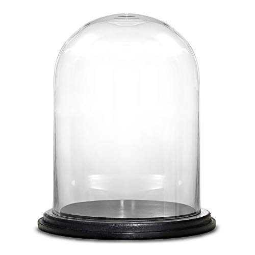 CYS EXCEL Glass Dome Cloche with Black Wood Base (H:16
