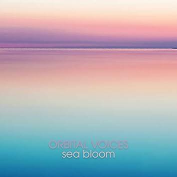 Sea Bloom