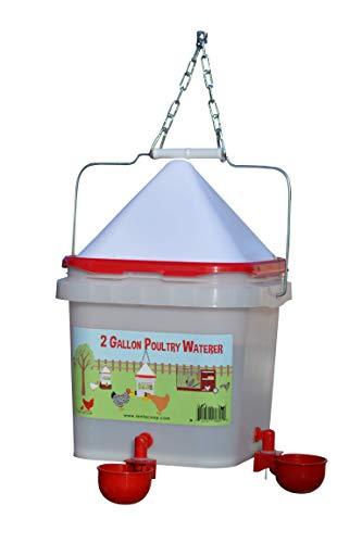 RentACoop 2 Gallon Red Cup Waterer (Corner)