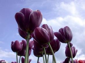 Hot Sale! 100 Pcs Gardenia Seeds (Cape Jasmine) -DIY jardin en pot Bonsai, étonnante odeur et de belles fleurs pour manger, # 3Y0YW