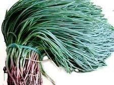 Agretti, Oka Hijiki Seeds - Land Algen, Salzkraut, europäische, asiatische Spezialität (5 Gramm)